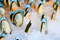 Mussels. On ice. Eat buffet Royalty Free Stock Images