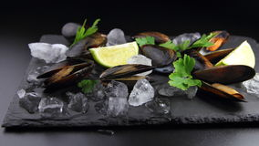 Mussels with ice,lime and greens Royalty Free Stock Photography
