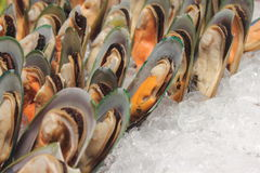 Mussels on ice Royalty Free Stock Images