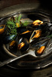 Mussels III Stock Photography