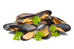 Mussels isolated Royalty Free Stock Photos