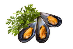 Mussels isolated Stock Photos