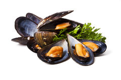 Mussels isolated Royalty Free Stock Image