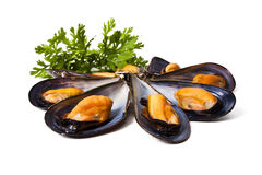 Mussels isolated Stock Image