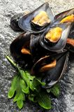 Mussels in a kitchen raw ingredient food preparation recipe Royalty Free Stock Photos