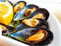 Mussels with lemon stock photo