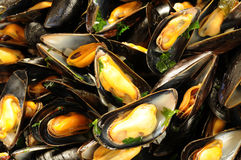 Mussels mariniere Stock Image