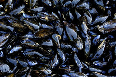 Mussels at the market Royalty Free Stock Photo