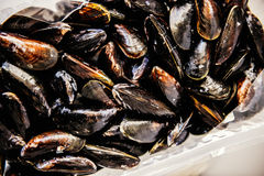 Mussels at market Royalty Free Stock Photos