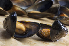 Seafood - Mussels - Moules Marinieres Royalty Free Stock Photos