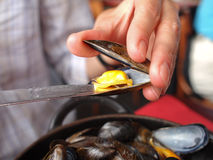 Mussels mule. One opened Mussel with knives stock photos