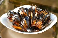 Mussels na talerzu Fotografia Stock