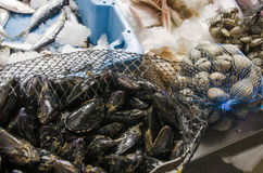 Mussels in a net at the fish market Stock Photo