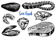 Mussels and octopus, oyster and salmon steak, tiger shrimps, sea shell. Seafood for the menu. River and lake or sea. Creatures. Freshwater aquarium. Engraved Stock Images