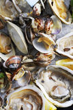 Mussels and oysters Stock Photos
