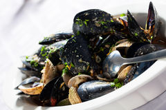 Mussels on a plate. Royalty Free Stock Photo