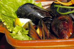 Mussels on the plate. Delicious dish with mussels and salad Stock Photo