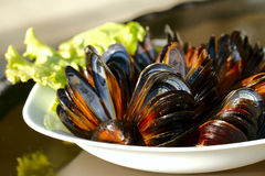 Mussels on the plate. Empty mussels on the plate Stock Image
