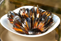 Mussels on the plate. Empty mussels on the plate Stock Photography