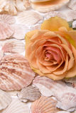 Mussels and rose. Various mussels and beauty flower yellow rose Royalty Free Stock Photos