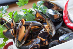 Mussels Saute Stock Images