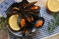 Mussels seafood cooking at steam technique oven Stock Images