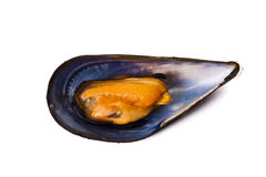 Mussels, seafood Royalty Free Stock Images