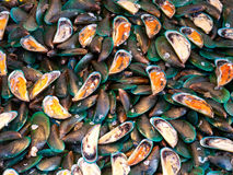 Mussels at a seafood market in Thailand Stock Photography