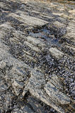 Mussels on seashore stock image