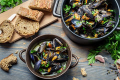 Mussels served with bread in a country way Royalty Free Stock Photo