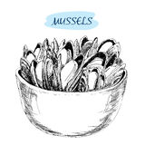 Mussels. Stock Photos