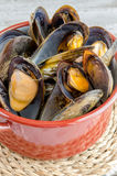 Mussels in the shell Stock Photography