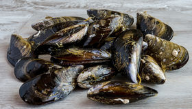 Mussels in the shell Stock Images