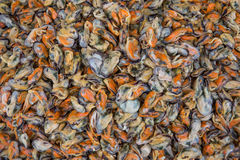 Mussels without shell Stock Image
