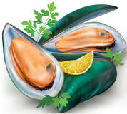 Mussels and shell Royalty Free Stock Image