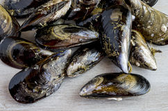 Mussels in the shell Stock Image