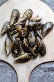 Mussels in the shell Royalty Free Stock Photo
