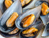 Mussels in the shell Royalty Free Stock Photos