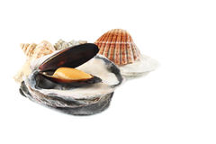 Mussels in shells Royalty Free Stock Photos