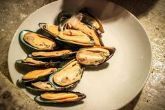 Mussels on shells lay in plate Royalty Free Stock Photo