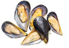 Mussels in the sink over white background.  Royalty Free Stock Images