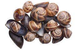Mussels and snails Stock Image