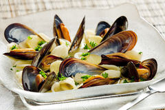 Mussels soup Stock Photos