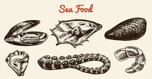 Mussels and squid, octopus and sea shell. River and lake or sea creatures. Freshwater aquarium. Poster for the menu. Engraved hand drawn in old vintage sketch Royalty Free Stock Images