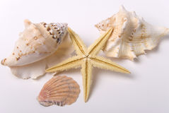 Mussels and starfish. Marine items various mussels and starfish Stock Photos