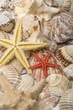 Mussels and starfish. Lot of mussels and various starfishes as backgrounds Stock Photos