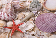 Mussels and starfish royalty free stock photos