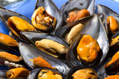 Mussels steamed Stock Photo