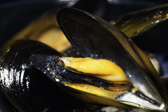 Mussels in strict close up Stock Image