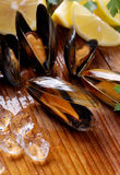 Mussels on the table Stock Photography